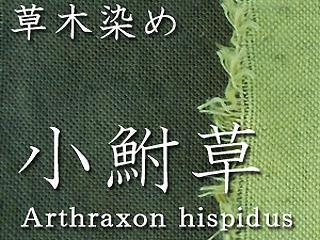 草木染めワークショップ 小鮒草